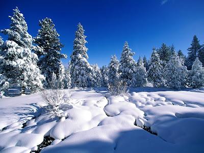Mooie Sneeuw Achtergrond met bomen