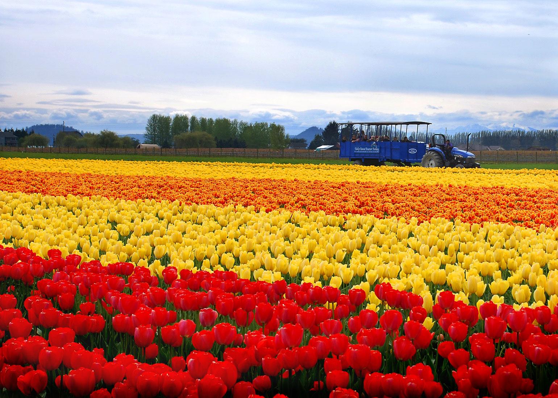 Floricultura | Obtenção e Espécies Florais