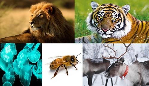En Çok İnsan Öldüren 15 Hayvan Türü Hangisi?