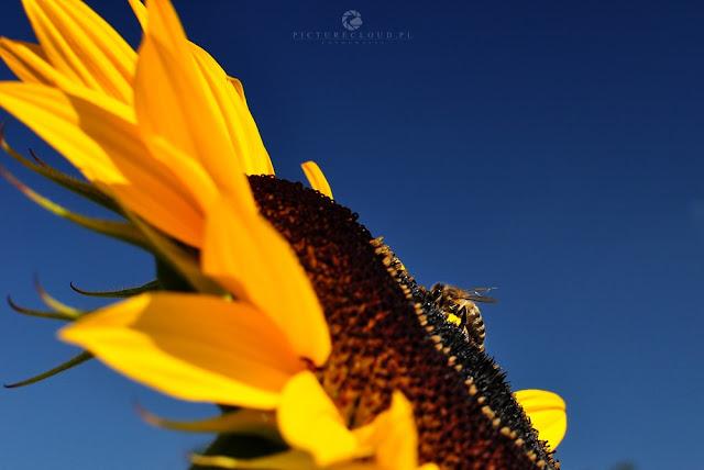 www.picturecloud.pl, blog fotograficzny