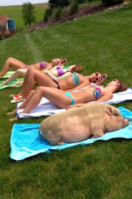 Lustiges Tier Bild - In der Sonne liegen und sich bräunen