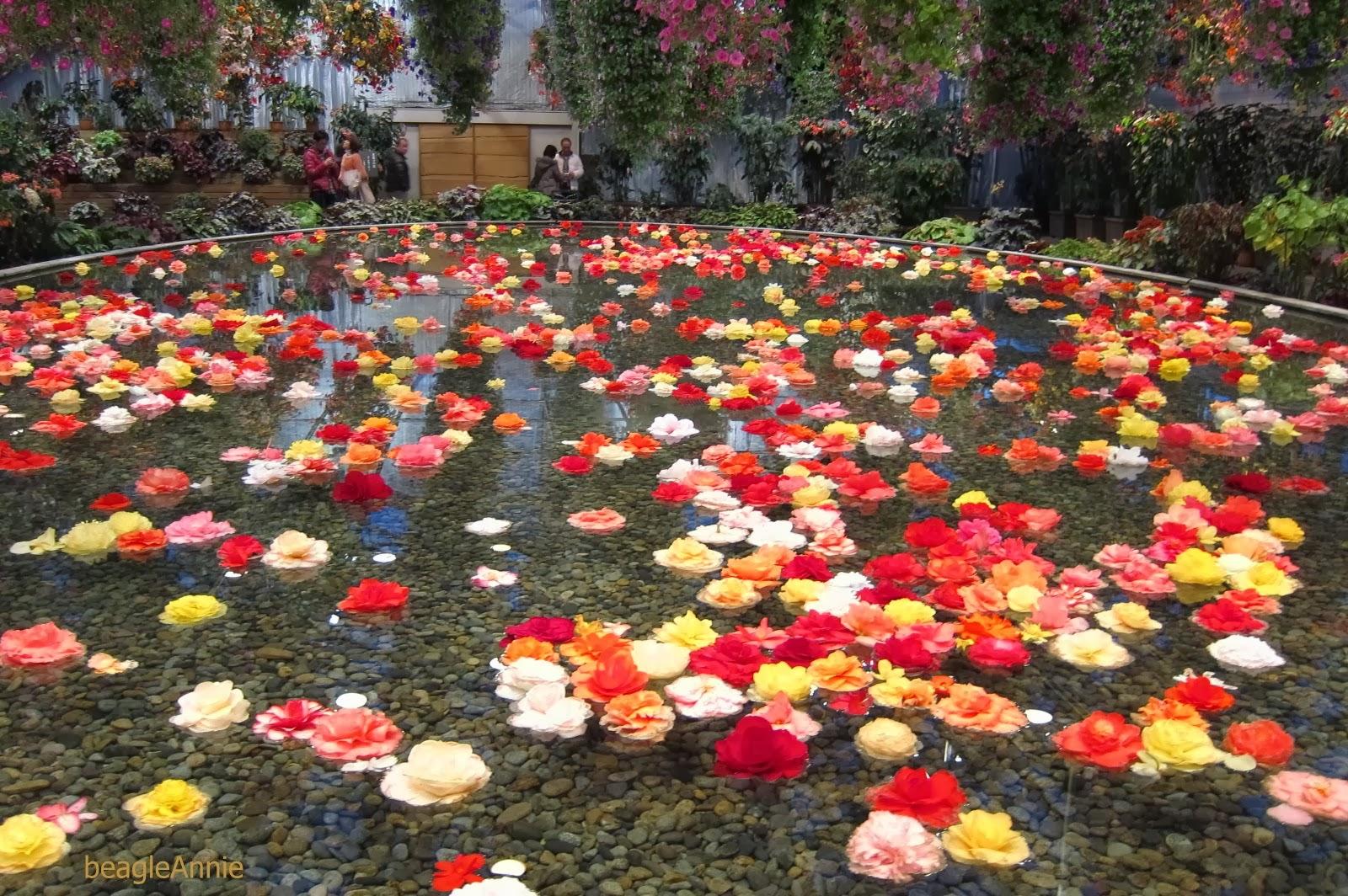 Round Of The Seasons In Japan Begonia Garden