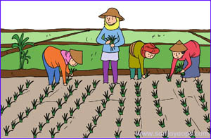 pertanian halaman 87