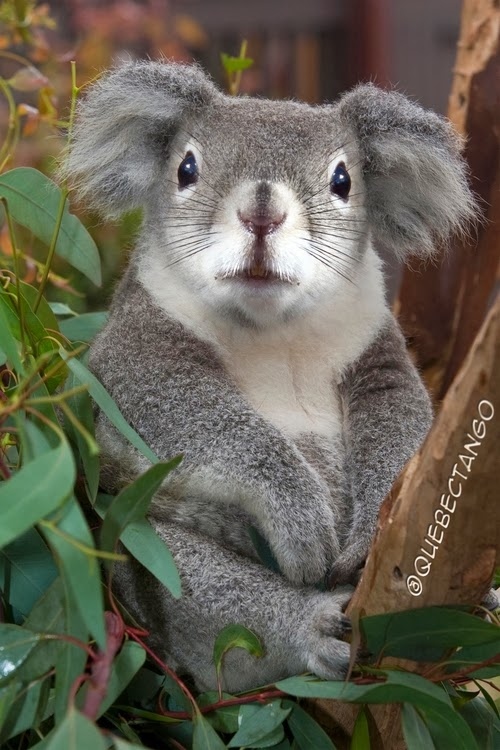 24-Squirrel-and-Koala-a-Squoala-Graphics-Designer-Digital-Taxidermist-Animangler-www-designstack-co