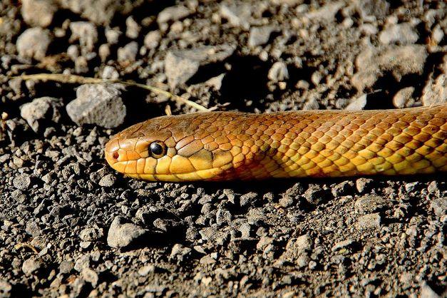 У Львівській області троє дорослих і дитина потрапили в реанімацію після укусів змій