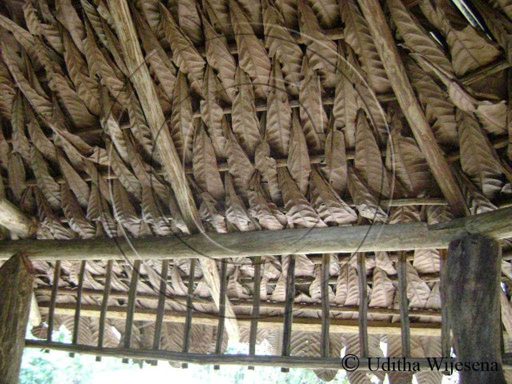 Forest bird november 2011 for Types of roof covering materials