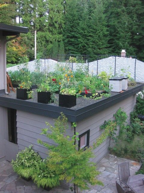This Ugly Old House Green Roofs Part Ii Small Scale Ideas