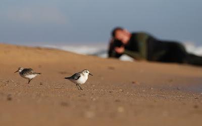 El autor fotografiando limícolas en la playa