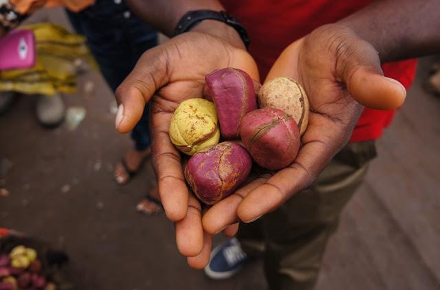 Kola nuts come from the evergreen kola tree