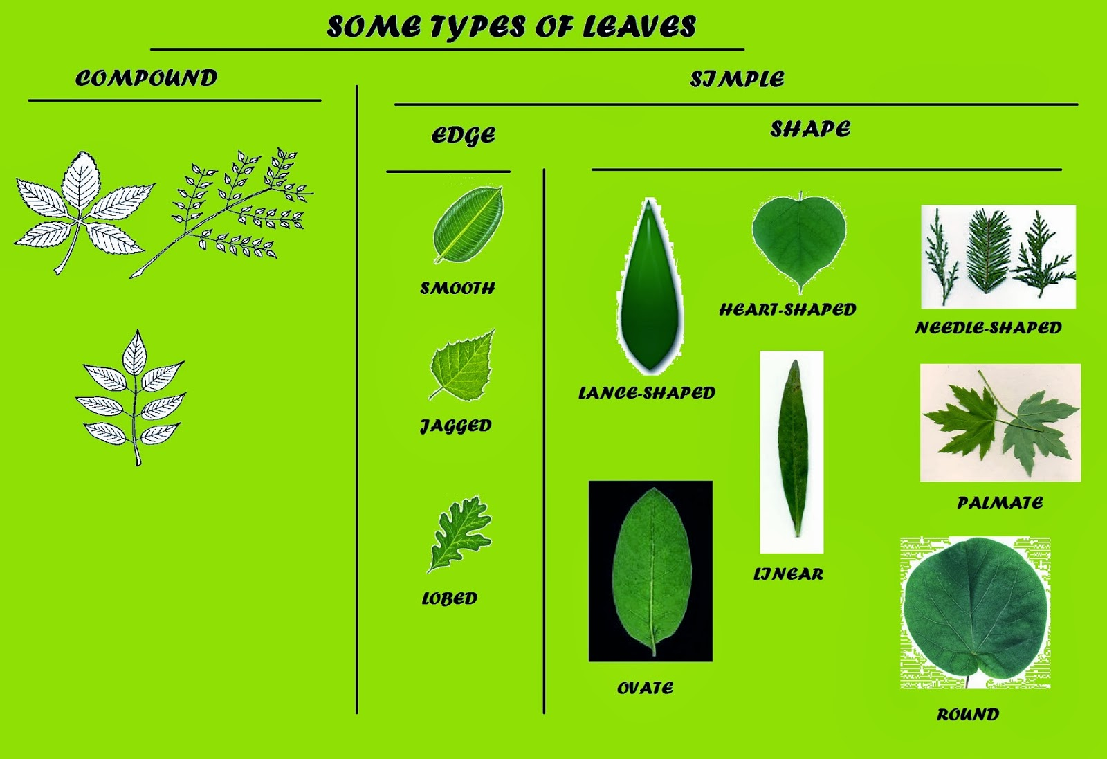 Science Blog Year 4 Parts Of Plants Leaves