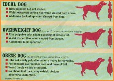 cães obesos