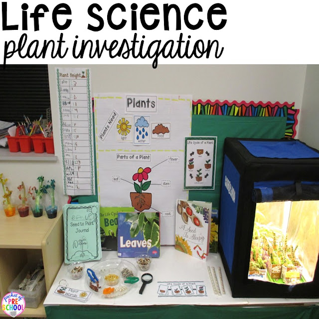 Life science investigation for preschool students - plants - with freebies