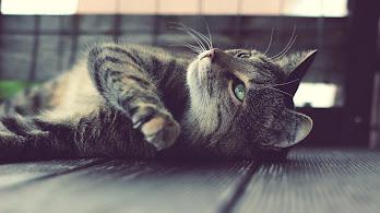 Cat, Lying, 4K, 3840x2160, #56
