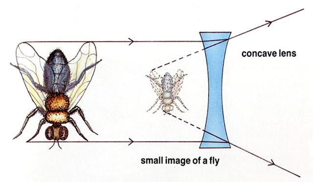 Catatan Kecil: Lensa Cembung & Cekung - Pe Jung Labs