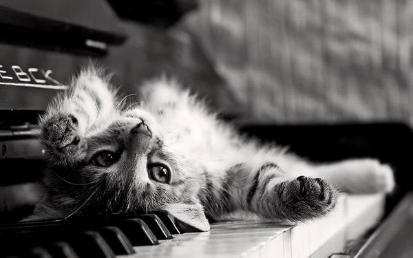 Các bước tự học đàn Piano điện
