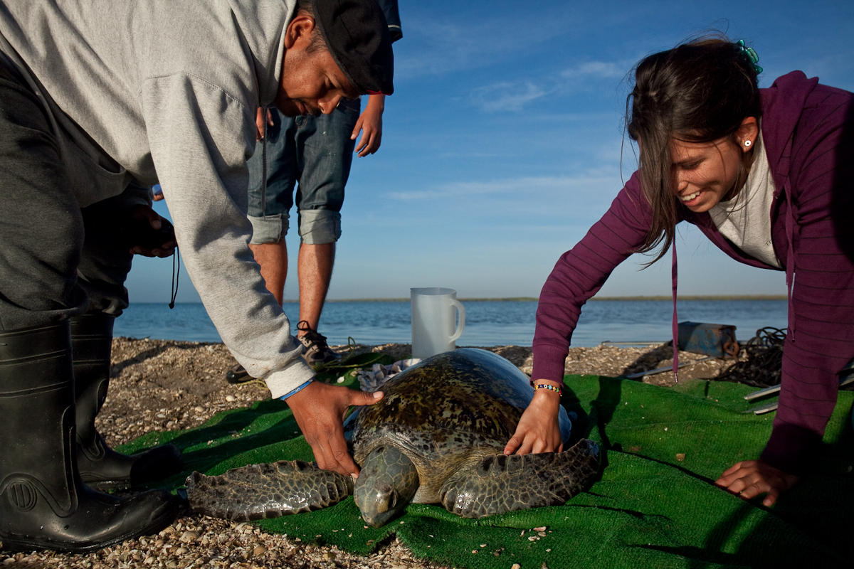 See Turtles Blog People Helping Turtles Turtles Helping