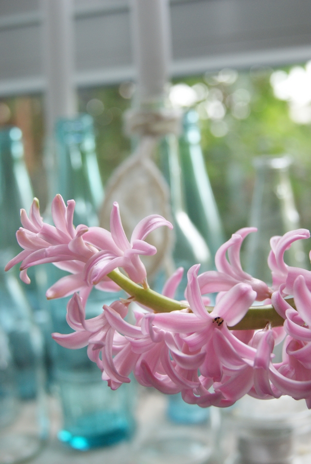 Frühlingsdeko auf der Fensterbank mit Hyazinthe nah