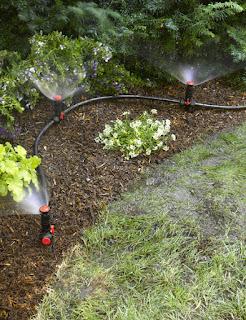 Növények öntözés kert