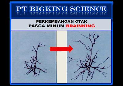 http://www.brain-king-plus.com/2016/09/branking-plus-nutrisi-otak-branking.html