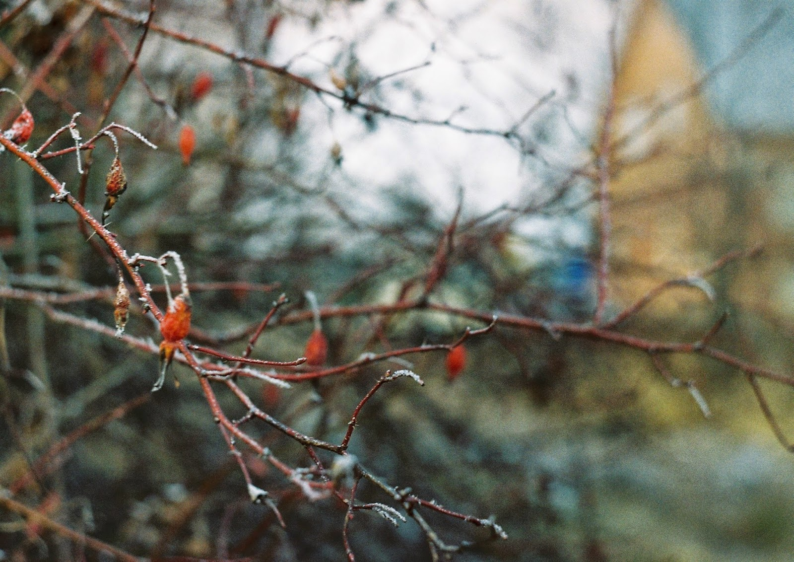 Фото на Зенит-Е