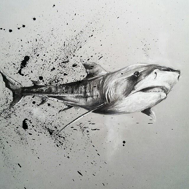 05-Shark-SW-Whiteside-www-designstack-co