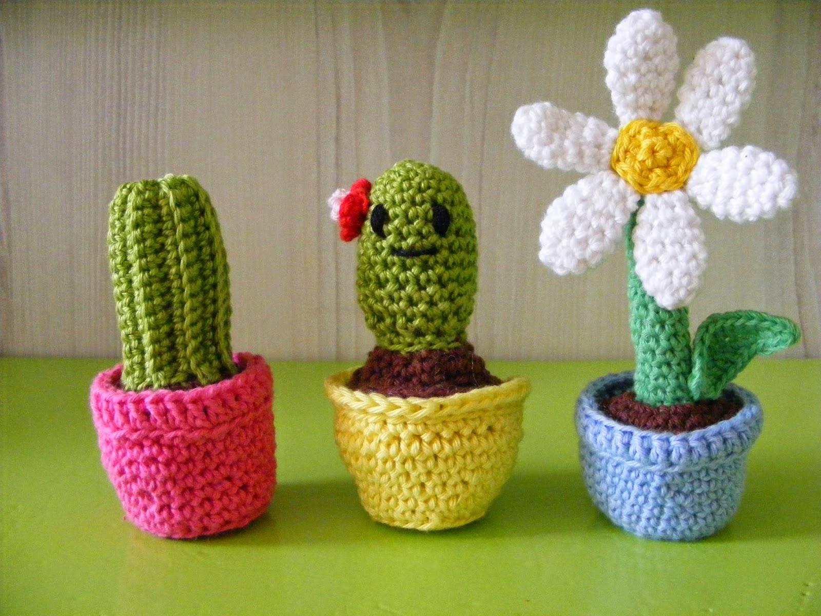 cactus bloem plantjes haken mexico