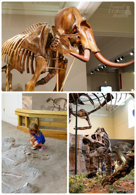 If you are planning a trip to Pittsburgh, then a visit to the Carnegie Museum of Natural History is a definite must for your itinerary. #kidsburgh #lovepgh