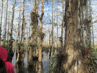 hiking amongst Cypress Trees in water