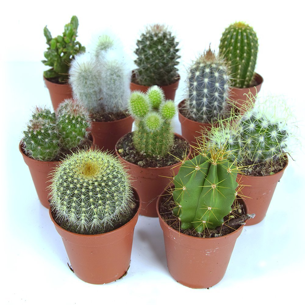 Identify What Types of Succulents You Own - Succulent ...