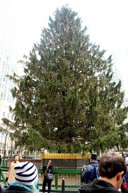 Tree at Rockefeller Center 2013