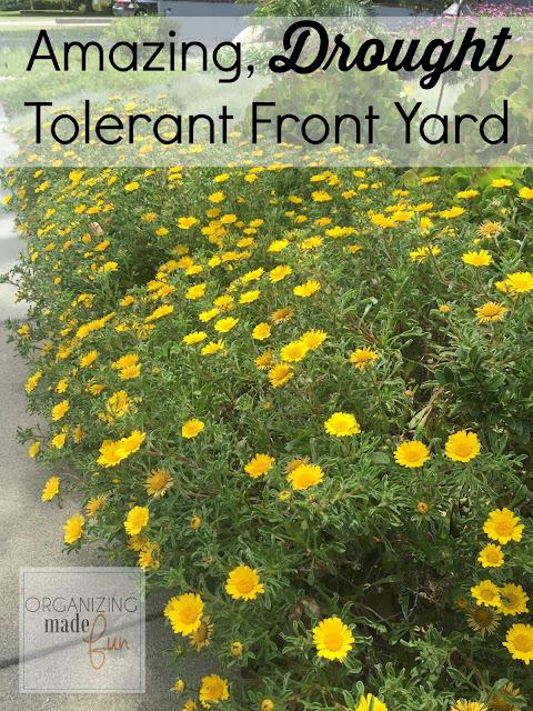 Amazing, Drought Tolerant Front Yard :: OrganizingMadeFun.com