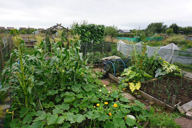 tidied up plot in August- Carrie Gault 2018