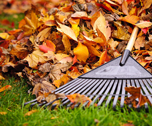 rake on leaves