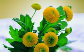 Health Benefits of Marigold (Calendula officinalis)