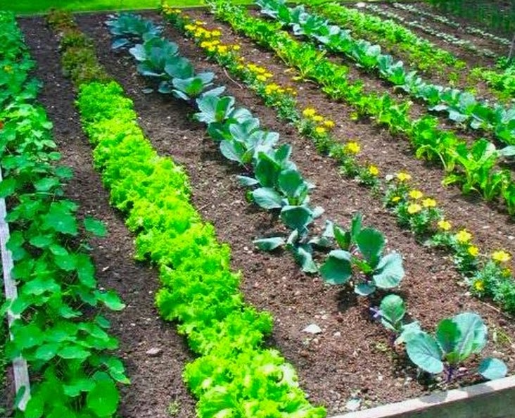 Spot Selection And Marking The Boundaries First Step Towards This Process Is To Select A Proper For Your Garden Most Of Vegetables Require