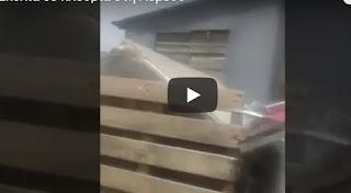 Λεμεσός: Βίντεο από διάσωση σκύλλων που διέμεναν σε άθλιες συνθήκες [video]