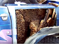 Bees on the intercontinental Harvester Scout