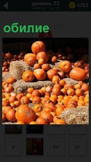 Большой урожай овощей, который выращен человеком на своем огороде