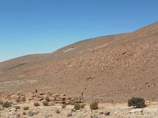 Cactus Guatin Trekking