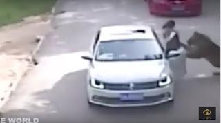 Tigres matam mulher e ferem outra em parque; veja vídeo