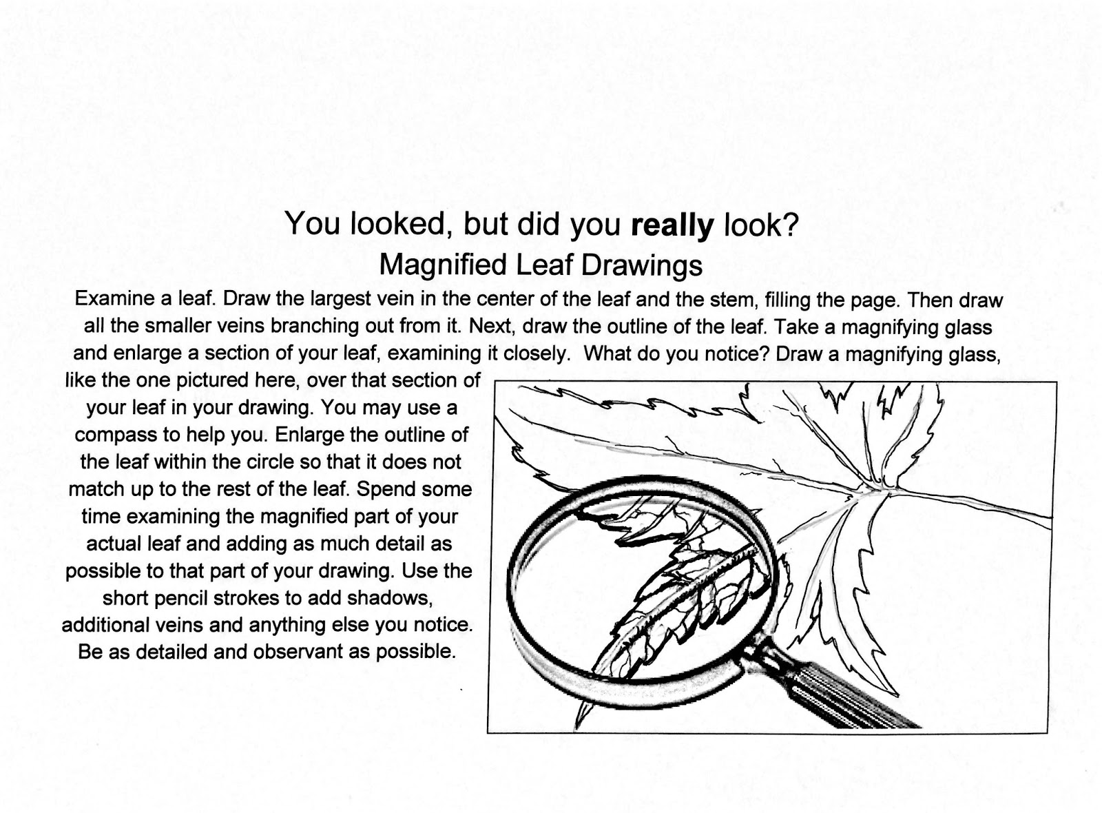 The Helpful Art Teacher Drawing Magnified Leaves Finding