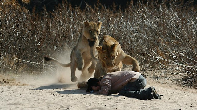 Born Again Pastor Challenged Lions To Prove God's Power, Nearly Killed Him, Saved By Game Rangers