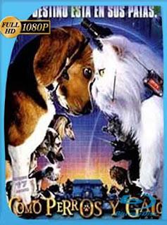 Como Perros y Gatos 1 (2001) HD [1080p] Latino [GoogleDrive] DizonHD