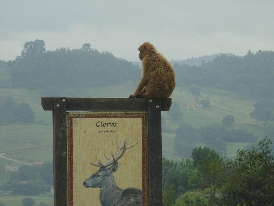 Animales sueltos Parque de la Naturaleza de Cabárceno, Santander