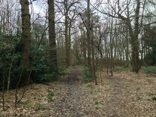 Woodland on Leeds Country Way