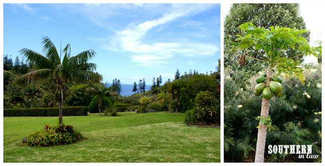Norfolk Island Accomodation Tintoela Kushu Cottage Review - Boutique Accomodation Allergy Safe Holiday