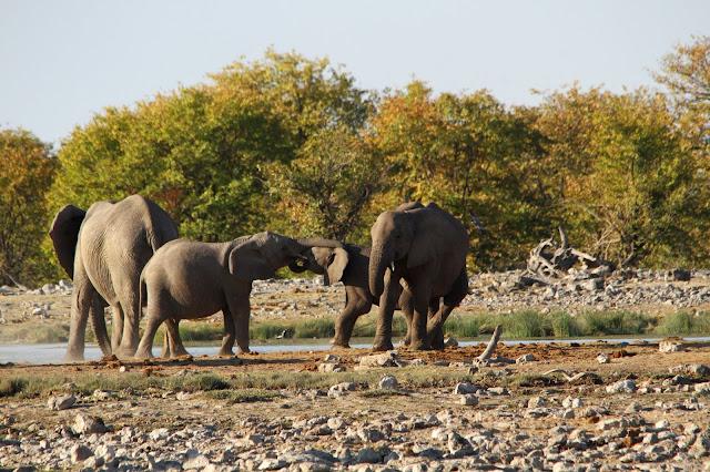 Lugares obrigatórios a VISITAR NA NAMÍBIA e que não pode faltar no seu roteiro | Namíbia
