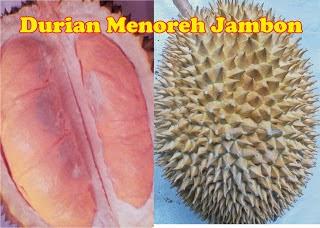 warna Buah Durian Menoreh Jambon MSTech: tlp/wa: 0812-1560-7921