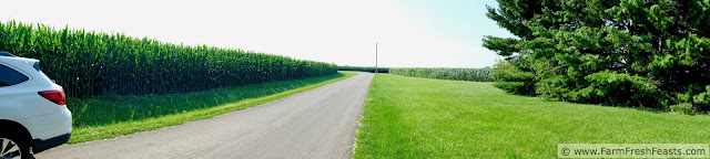 view of the country lane with cornfields on either side of the road