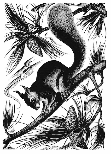 Agnes Miller Parker illustration of squirrel and pine